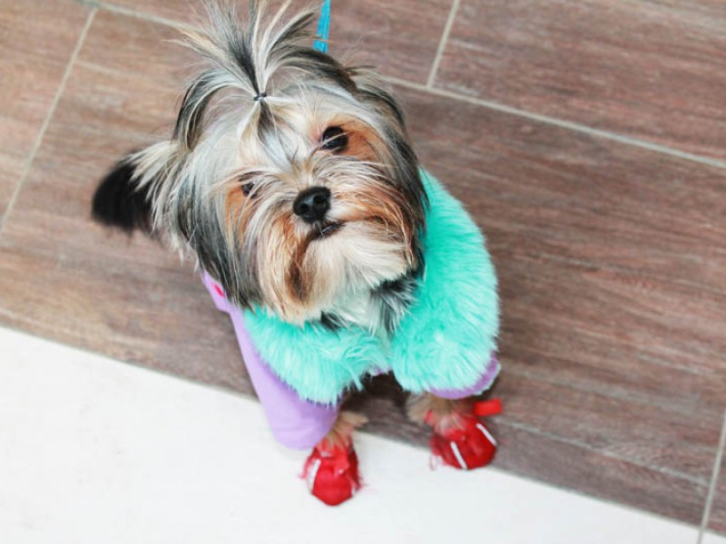 Фотоотчет «Детской и собачьей моды»